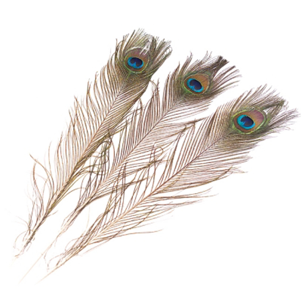 PEACOCK FEATHERS - pack of 3 pcs.