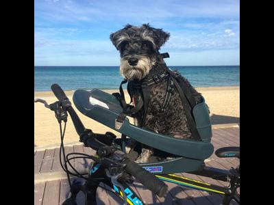 Buddyrider - Cykelsæde til hund - Grå