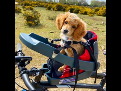 Buddyrider Booster - Kurv til ekstra komfort og mindre hunde - Rød/sort