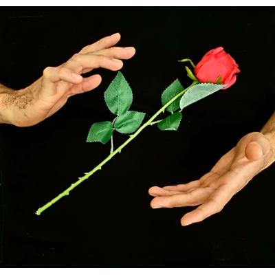 FLOATING ROSE -  Kevin James
