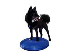 FITPAWS BALANCESKIVE