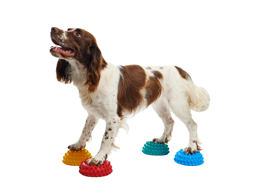 FITPAWS PAW PODS TRENINGSPUTER